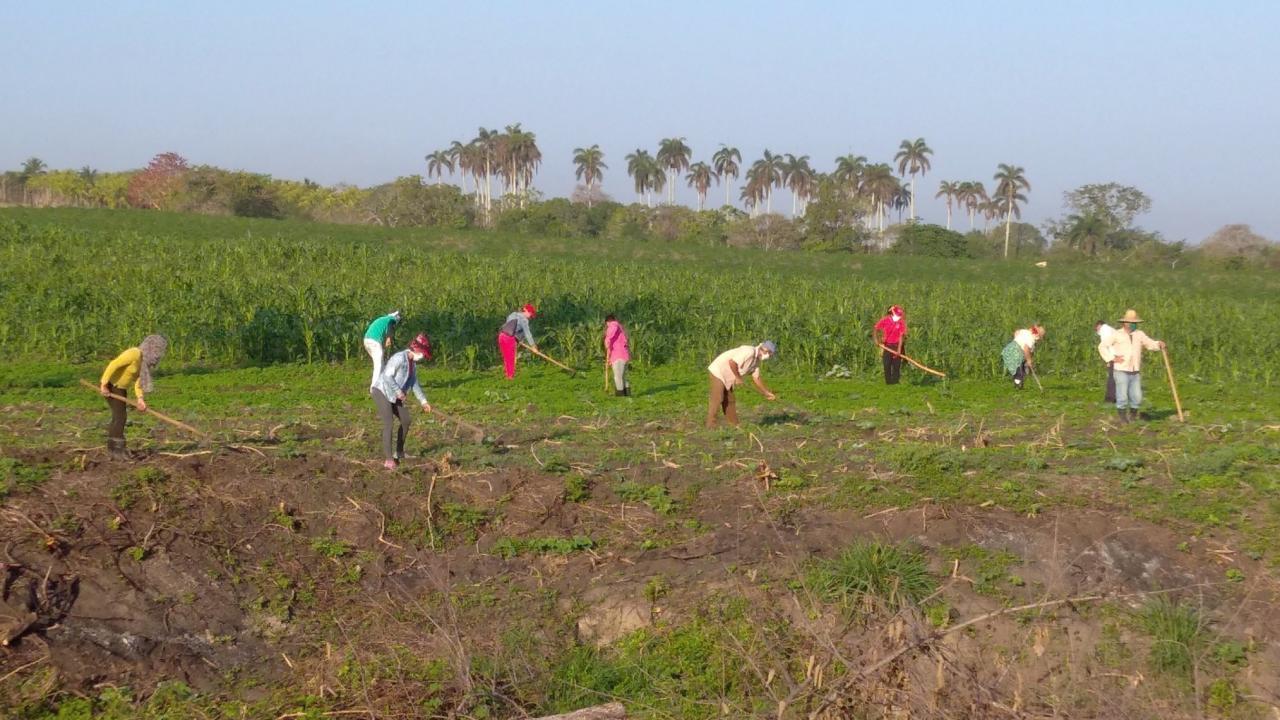 Campesinos cubanos.